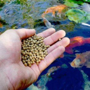Корм для прудовых рыб
