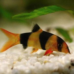 Корм для донных рыбок